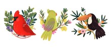 Set Of Three Various Birds Sitting On The Branches. Hand Drawn Colored Illustration