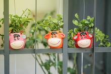 Closeup Cute Flowerpot In Cow ...