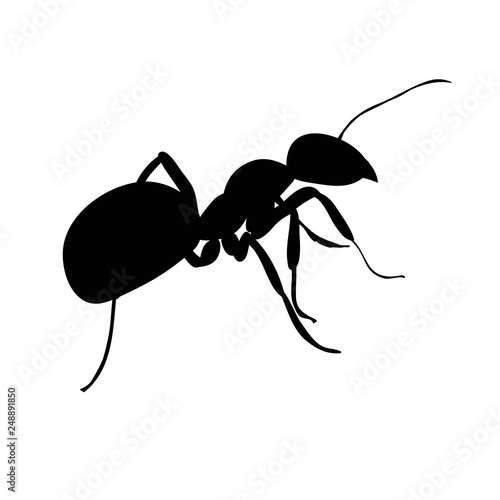 vector isolated, silhouette of insect ant Canvas Print