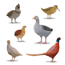 Isolated Hunting Birds, Vector...