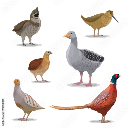 Isolated hunting birds, vector wildfowl Canvas-taulu