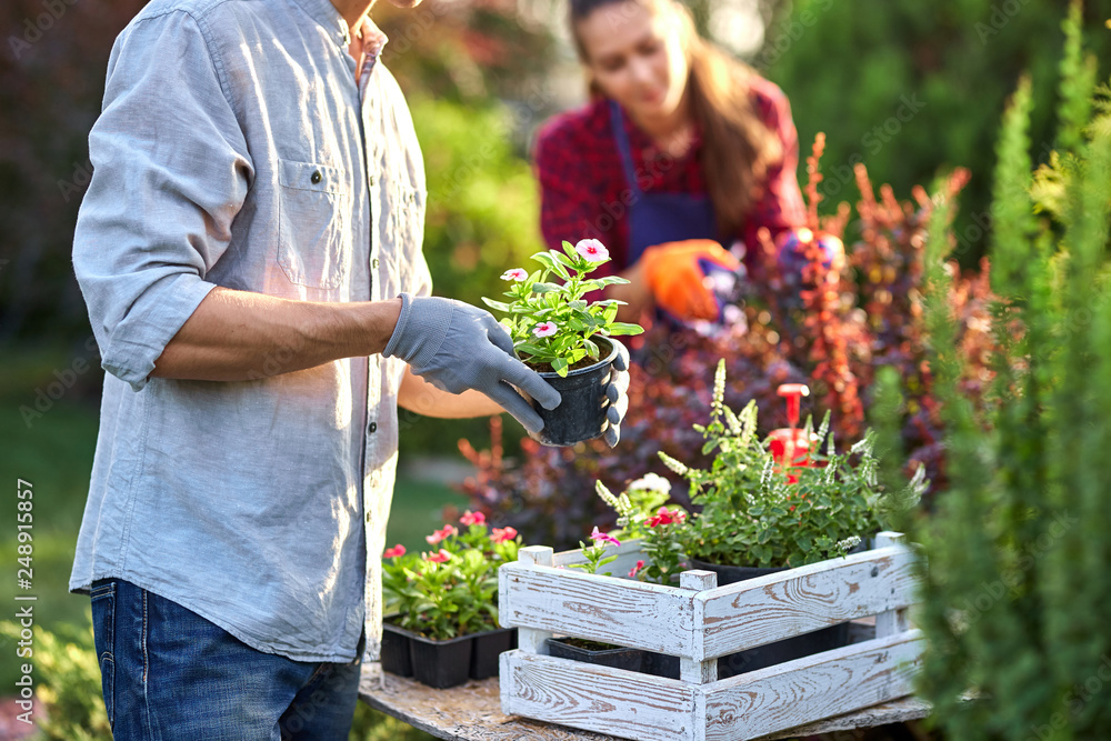 Fototapety, obrazy: Guy gardener in garden gloves puts the pots with seedlings in the white wooden box on the table and a girl prunes plants in the wonderful nursery-garden on a sunny day.