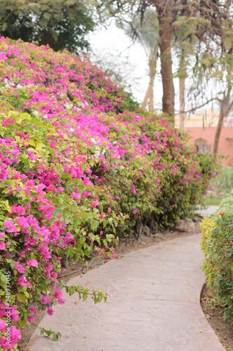 Cadres-photo bureau Jardin scenic path in the park
