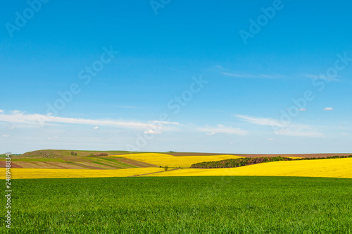 Foto auf Leinwand Blau Colorful spring landscape with green wheat and blooming rapeseed