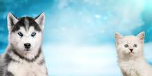 Cat And Dog Together On Bright Light Snow Background, Neva Masquerade, Siberian Husky Looks Straight. Christmas Mood
