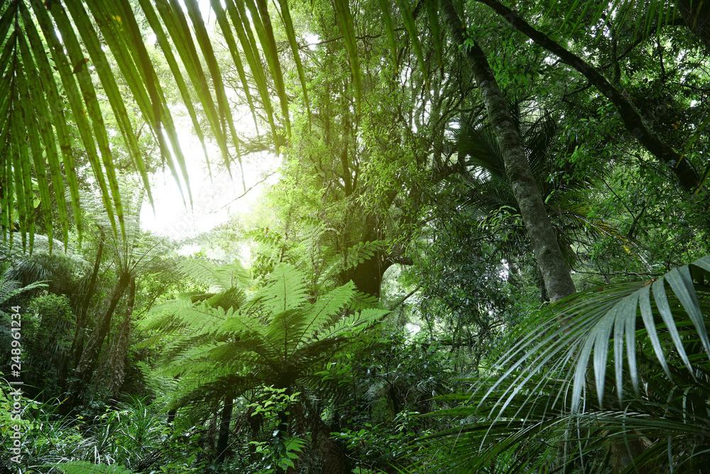 Fototapeta Canopy of jungle