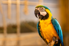 Close-up On Happy Ara Parrot On Perch With Blurred Background