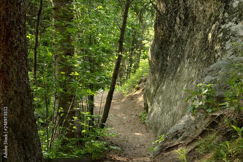 Walking Trail through Forest