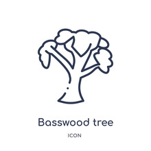 Basswood Tree Icon From Nature Outline Collection. Thin Line Basswood Tree Icon Isolated On White Background.