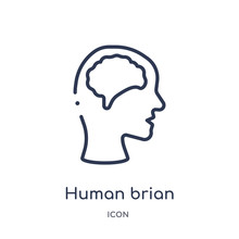 Human Brian Icon From Nature Outline Collection. Thin Line Human Brian Icon Isolated On White Background.