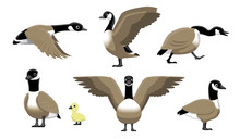 Canada Goose Flying Cartoon Ve...