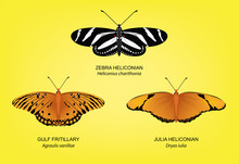 Butterfly Zebra Heliconian Set Vector Illustration
