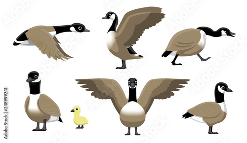 Fotografie, Tablou Canada Goose Flying Cartoon Vector Illustration