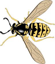 Yellow Jacket Wasp Vector Illustration