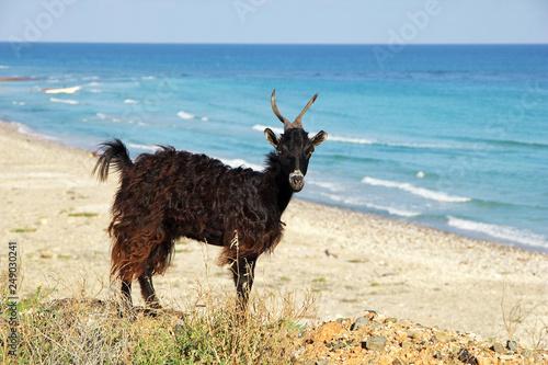 Plakat Jemeńska wyspa Socotra