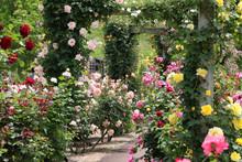 ばら園 薔薇ガーデン ばら公園 薔薇 バラ ばら