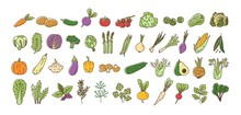 Collection Of Fresh Ripe Organic Vegetables, Cultivated Root Crops, Salads, Herbs Isolated On White Background. Bundle Of Natural Design Elements. Colorful Vector Illustration In Line Art Style.