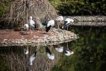 Natural Life Park, Zoo, Izmir ...