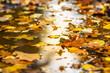 canvas print picture - Orange Laubblätter im Herbst schwimmen auf einem Teich