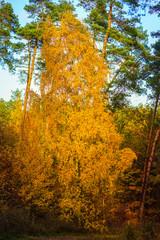 Fototapeta Do hotelu Herbstlandschaft
