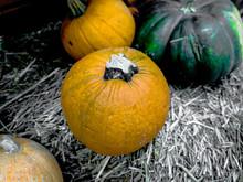 Orange Halloween Pumpkins On Rice Straw, Holiday Decoration In A Market.
