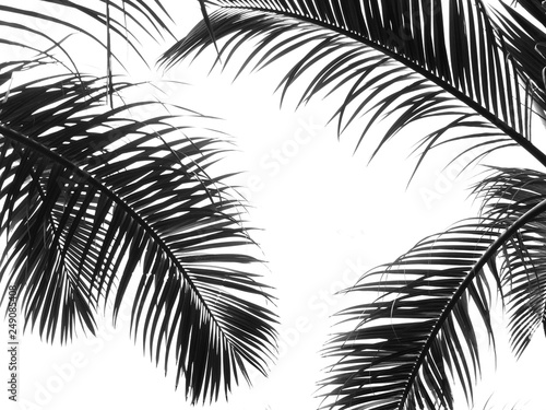 La pose en embrasure Palmier beautiful palms leaf on white background