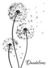 Black Dandelion Silhouette On White Background. Vector Illustration.