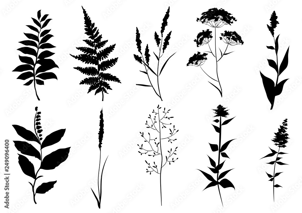 Fototapety, obrazy: Hand drawn set of black silhouettes of wild set of black silhouettes of wild meadow herbs. Wildflowers. Wild grass. Vector illustration.