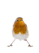European Robin (Erithacus Rubecula) Isolated