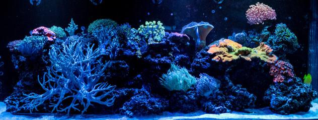 hard coral macro in aquarium