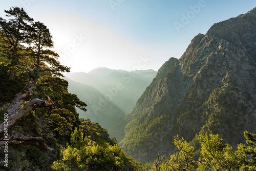 Foto auf Gartenposter Himmelblau Samaria gorge forest in mountains pine fir trees green landscape background