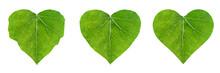 Heart Shape Leaf, Set Of Ivy L...