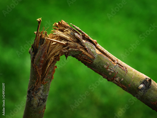 Photo Broken Branch Tree Limb Green Break Splinters Sharp