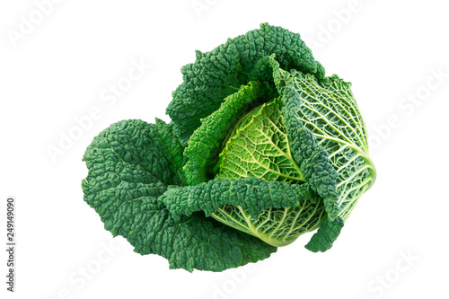 Obraz Isolated fresh savoy cabbage head - fototapety do salonu