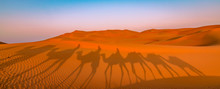 Panoramic View Of Camel Ride In The Desert. Shadow Of Camels In The Desert Sand At Sunrise. Adventure In Dubai, Abu Dhabi.
