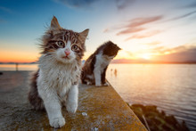 Two Long-haired Puppy Cat At Sunset On The Lagoon.