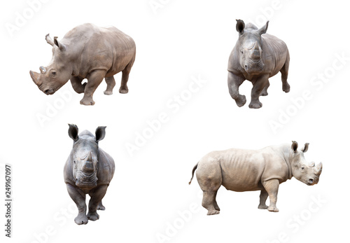 Photo sur Aluminium Rhino White rhino