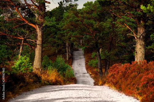 Weg durch die schottischen Highlands Canvas Print