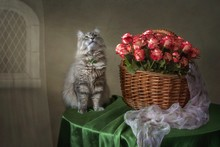 Still Life With Magnificent Bouquet Of Roses And Pretty Gray Kitty