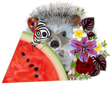 A Hedgehog By A Watermelon Slice With Flowers And A Butterfly