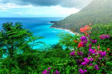 Delightful Caribbean Landscape