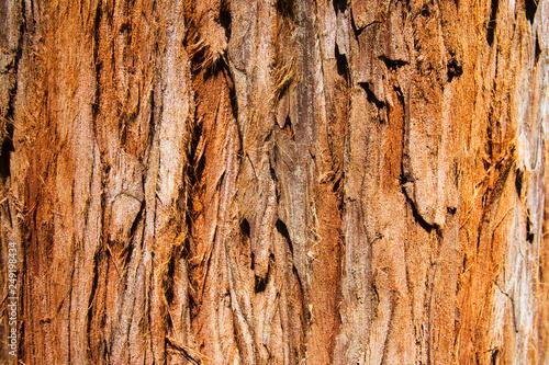 Canvas Prints Textures Giant Redwood Tree Texture, Background