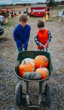 Brothers Pushing Pumpkins In Wheelbarrow At Farm