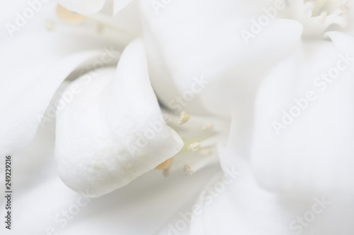 Poster Orchid Dianthus flower macro