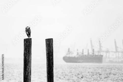 Fotografie, Obraz  Port of Flight