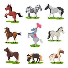 Flat Vector Set Of Different Horses. Hoofed Mammal Animal. Wildlife And Fauna Theme. Elements For Children Book