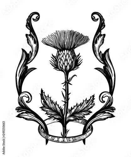 Fotografia Thistle flower in ornament frame