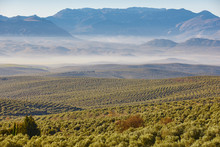 Olive Tree Fields In Andalusia...