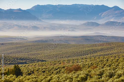 Foto  Olive tree fields in Andalusia