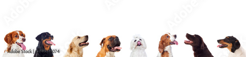 Spoed Foto op Canvas Hond Differents dogs looking at camera